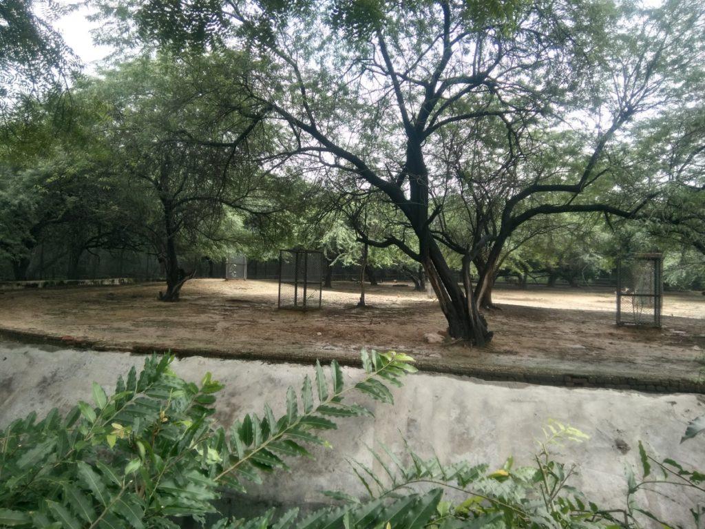 Species of Deer in Delhi Zoo