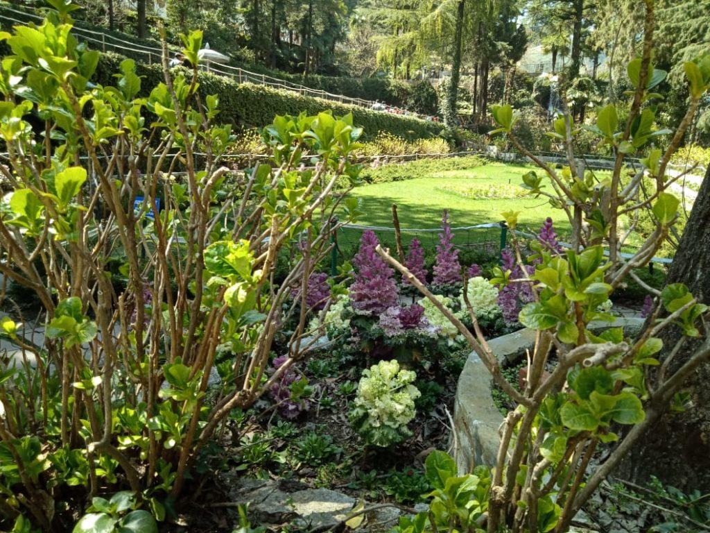 Mussoorie Company Garden