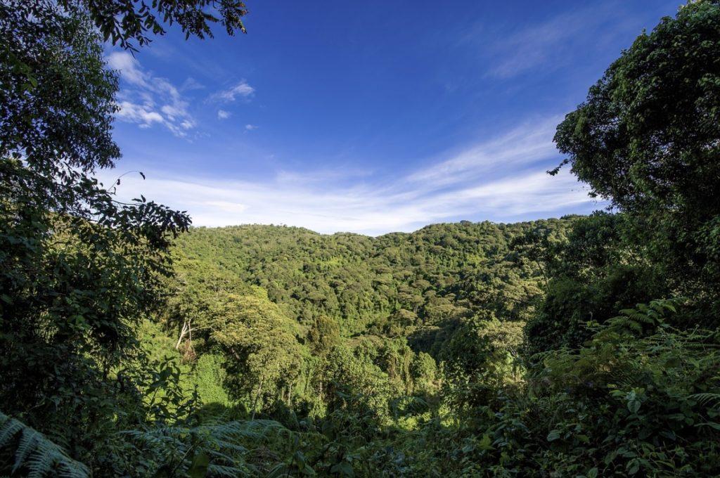 Best Time to Visit Ranthambore Wildlife Sanctuary
