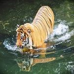 Ranthambore Wildlife Sanctuary Tour