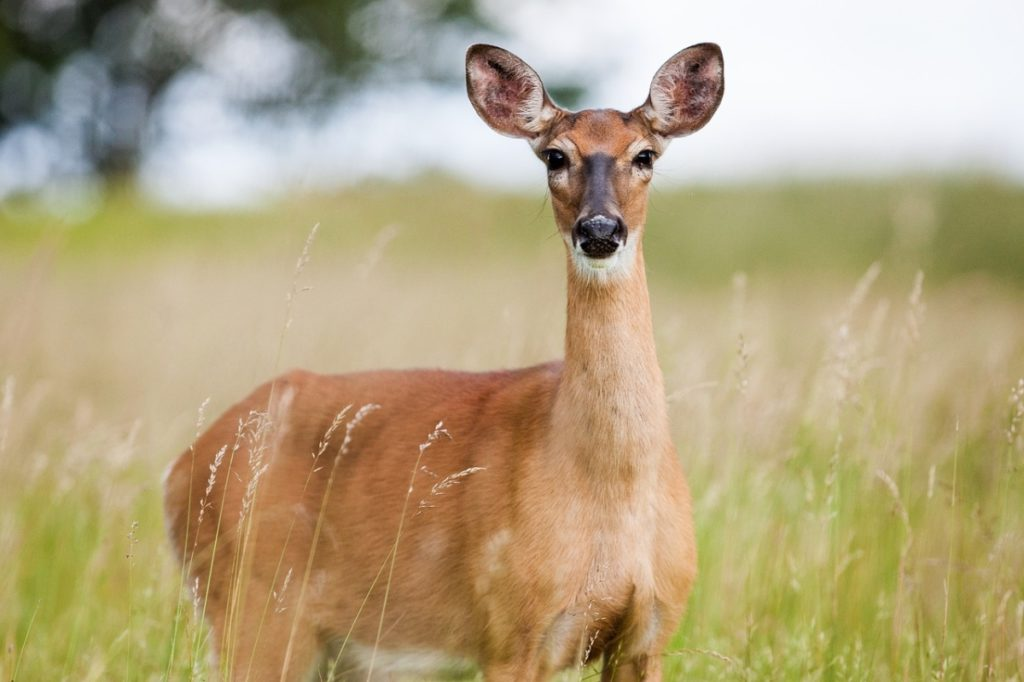 Wildlife Animals Ranthambore