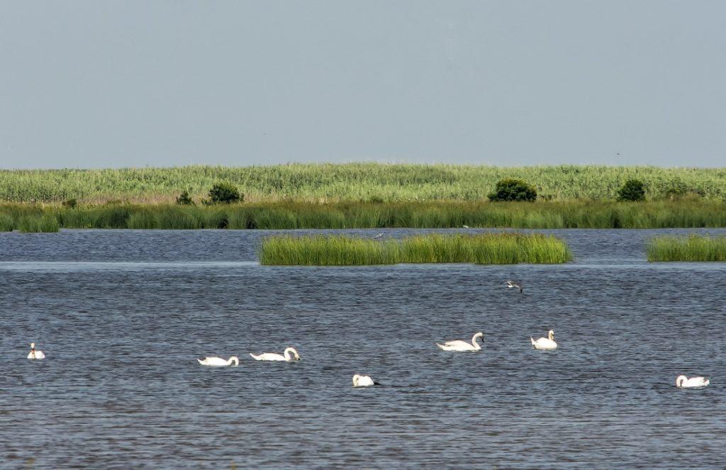 Bird Watching Places Rajasthan