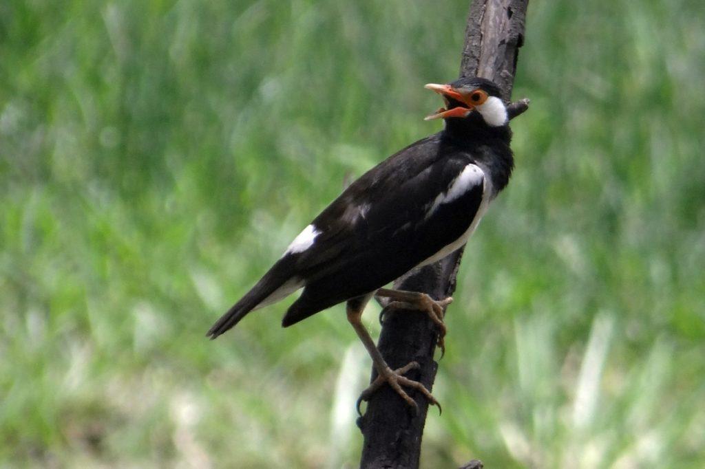 Birds Species in Bharatpur Sanctuary