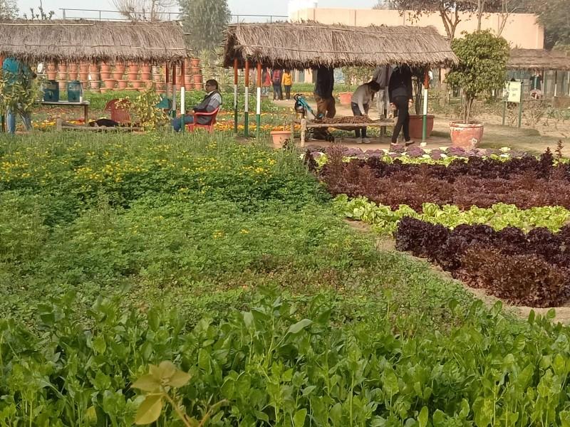 Vegetables Gardening at Pratapgarh Farms Jhajjar